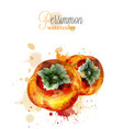 persimmon fruits watercolor delicious vector image vector image