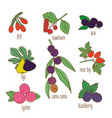 colored hand drawn botanical food set vector image vector image