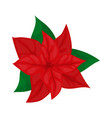 poinsettia flower christmas plant vector image