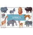 cartoon african animals template vector image vector image