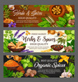 spices herbs vegetables and food seasonings vector image vector image