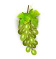 white table grapes wine grapes fresh fruit 3d