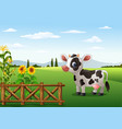 cartoon cow with farm background vector image vector image