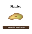 The structure of the platelet vector image vector image