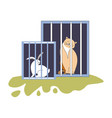 animal shelter kitty and bunny sitting in cages vector image vector image