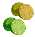 Green whole and half lime on white background vector image vector image
