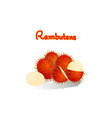 rambutan is fruit asean vector image vector image