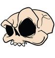 skull5 vector image vector image