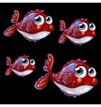 Sweetheart spotted shy fish on a black background vector image vector image