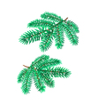 Branches Silver Spruce Christmas tree vector image