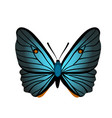 butterfly with blue wings vector image vector image