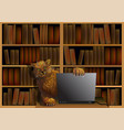 cat in the library vector image vector image