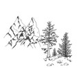 coniferous tree pine at rock bottom vector image