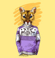 puma in knitted sweater vector image vector image