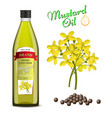 mustard oil set realistic vector image vector image