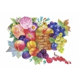 Colorful summer ripe fruits basket watercolor vector image