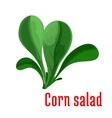 Corn salad dark green leaves icon cartoon style vector image vector image