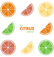 Flat icons of citrus vector image vector image
