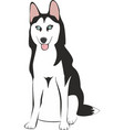 husky dog sitting isolated on white background vector image vector image