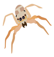 Jumping Spider vector image vector image