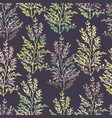 seamless pattern with herbs plants vector image vector image