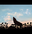silhouette wolf howling at evening sunset vector image vector image