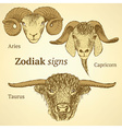 Sketch bull goat and ram head in vintage style vector image vector image