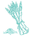 Outline hand drawn sketch of asparagus flat style vector image vector image