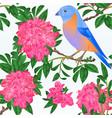 seamless texture small bird bluebird vector image vector image