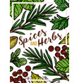 spices and herbs hand drawn poster template vector image vector image