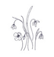 tender snowdrop flowers isolated on white vector image vector image
