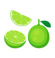 lime fruit set isolated on white vector image