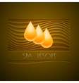 Spa themed design using golden line curve a vector image vector image