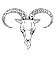 goat head isolated on white vector image vector image