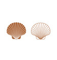 scallop vector image