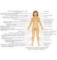 vitamin deficiency vector image