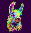 alpaca llama portrait abstract hand-drawn vector image