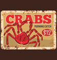 crabs meat seafood fresh catch banner vector image