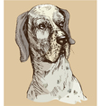 Dalmatian head - hand drawn -sketch in vintage sty vector image vector image