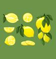 lemons fresh natural juice exotic tropical fruits vector image