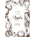 Vintage card design with apple fruits sketch
