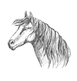 White horse with mane along neck sketch portrait vector image vector image
