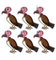 vulture with different facial expressions vector image vector image