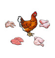 chicken and cutted meat parts set sketch vector image