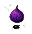 fig drawing hand drawn isolated fruit vector image vector image