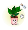 proper care of home plants of vector image