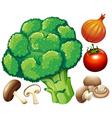 Many fresh vegetables on white vector image