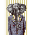 elephant in jacket vector image vector image