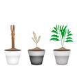 Fresh Cardamon Plants in Ceramic Flower Pots vector image vector image