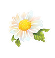 one chamomile flower isolated sunny sketch of vector image